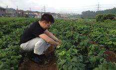 自社農園で作業する山﨑雅史社長