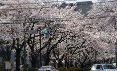 景観形成重点地区指定を目指す市道市役所前通り