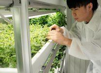 屋内農園で障害者雇用を支援するサービス