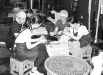 日本酒に漬け込む梅を仕込む学生ら